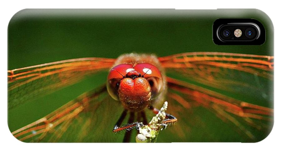 IPhone X Case featuring the photograph Be Free by Glen Baker