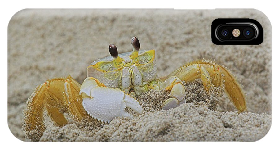 Sand IPhone X Case featuring the photograph Beach Crab In Sand by Randy Steele