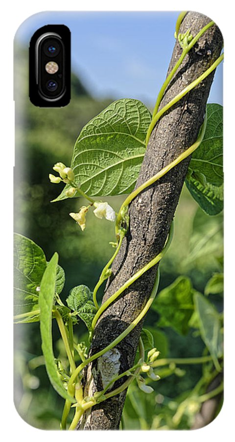 Abstract IPhone X Case featuring the photograph Beanstalk Bloom by Adrian Bud