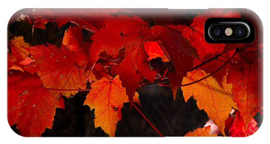 Red IPhone X Case featuring the photograph Beautiful Backlit Autumn Maple Leaves by Darrell Young