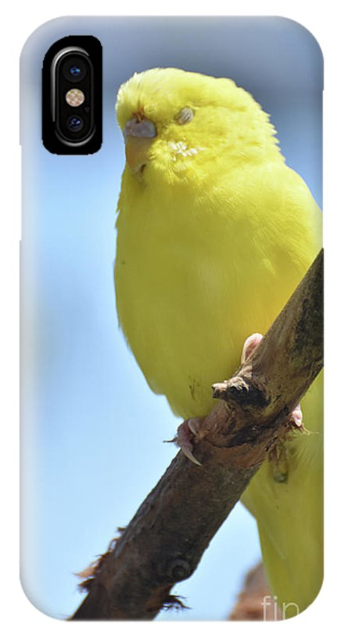 Budgie IPhone X Case featuring the photograph Beautiful Face Of A Yellow Budgie Bird by DejaVu Designs