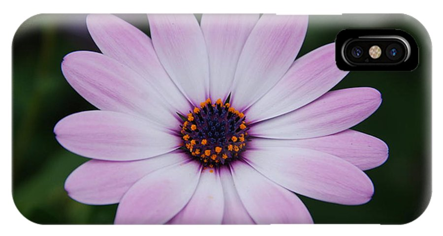 Flower IPhone X Case featuring the photograph Beautiful In Pink Today by Susanne Van Hulst