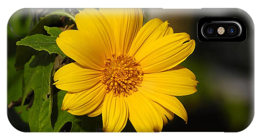 Yellow IPhone X Case featuring the photograph Beautiful In Yellow by David Lee Thompson