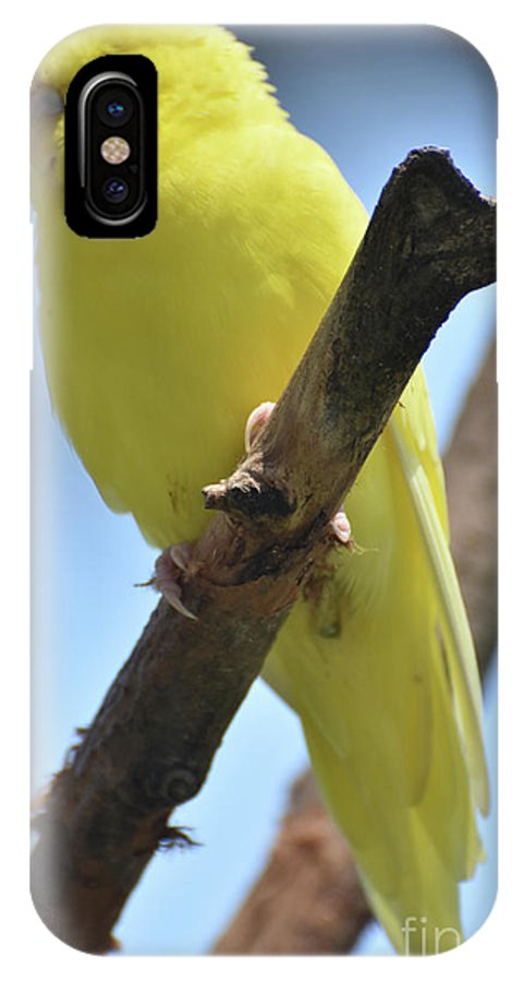 Budgie IPhone X Case featuring the photograph Beautiful Little Yellow Budgie Bird In Nature by DejaVu Designs