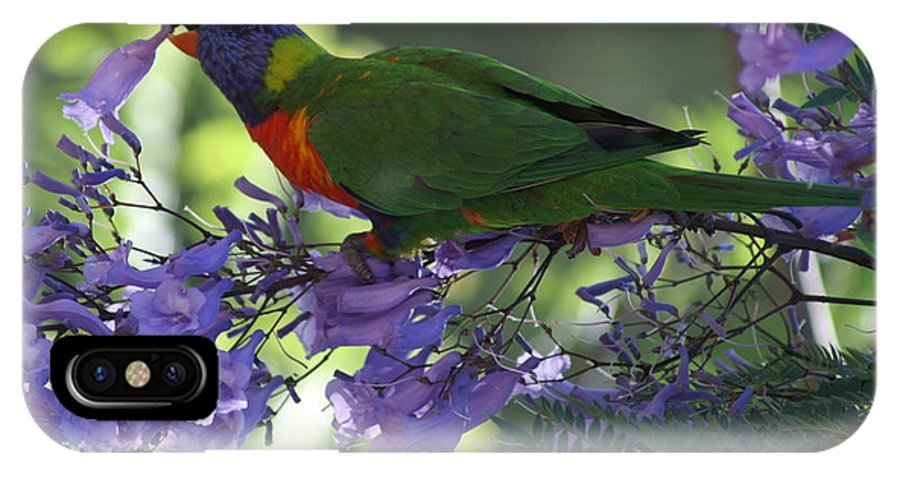 Parrot IPhone X Case featuring the photograph Beautiful Lorikeet by Brian Leverton