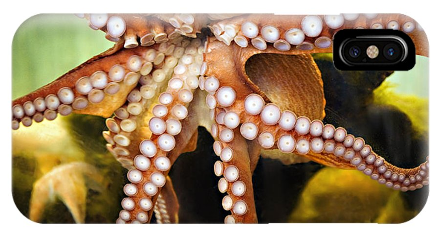 Octopus IPhone X Case featuring the photograph Beautiful Octopus by Marilyn Hunt
