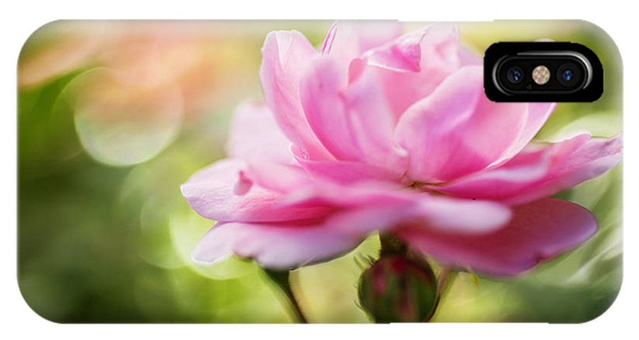 Rose IPhone X Case featuring the photograph Beautiful Pink Rose Blooming In Garden With Natural Bokeh by Vishwanath Bhat