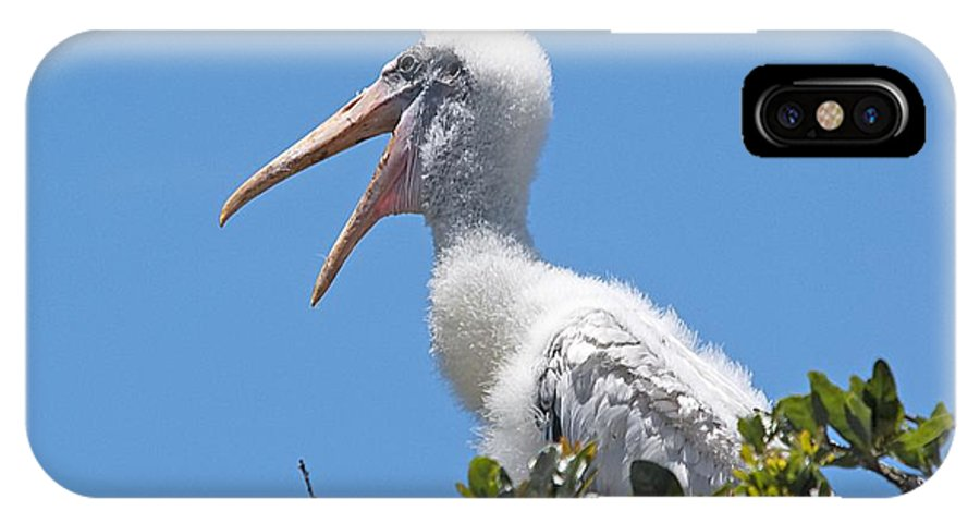 Wildlife IPhone X Case featuring the photograph Beauty Is In The Eye Of The Beholder by Kenneth Albin