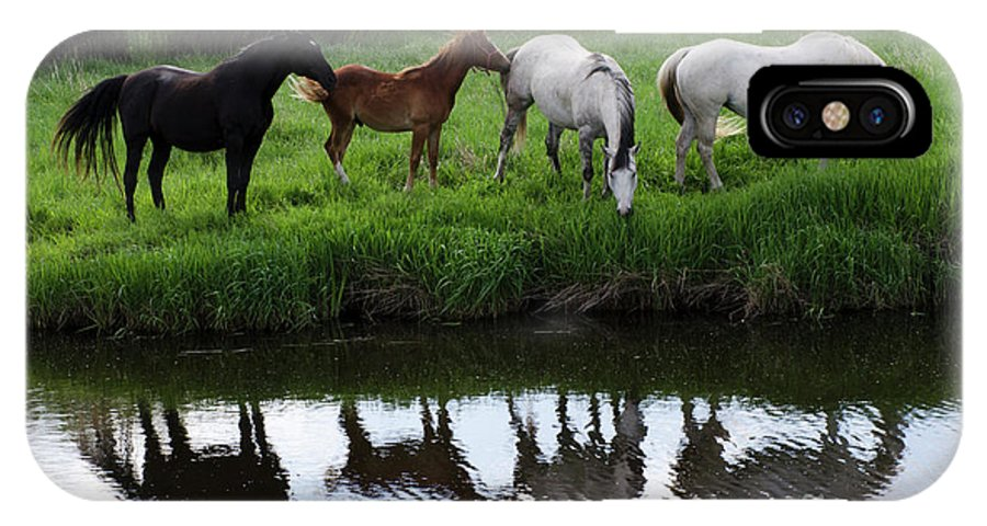 Horse IPhone X Case featuring the photograph Beauty Of Place by Bob Christopher