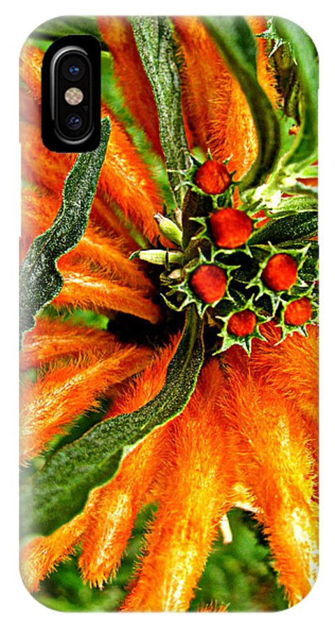 Bedazzled Bloom IPhone X / XS Case featuring the photograph Bedazzled by Debra   Vatalaro