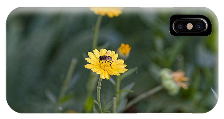 Animal IPhone X Case featuring the photograph Bee at work second sfift by Adrian Bud