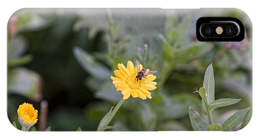 Animal IPhone X Case featuring the photograph Bee at work too by Adrian Bud