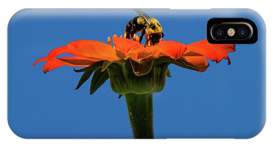 Bee Dreamsicle IPhone X Case featuring the photograph Bee Dreamsicle by Janet Ballard