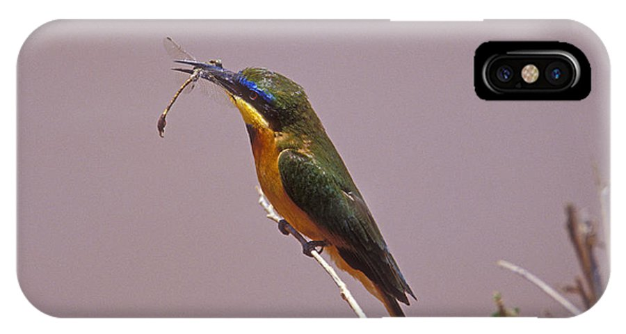 African Birds IPhone X Case featuring the photograph Bee Eater And Dragonfly by Sandra Bronstein