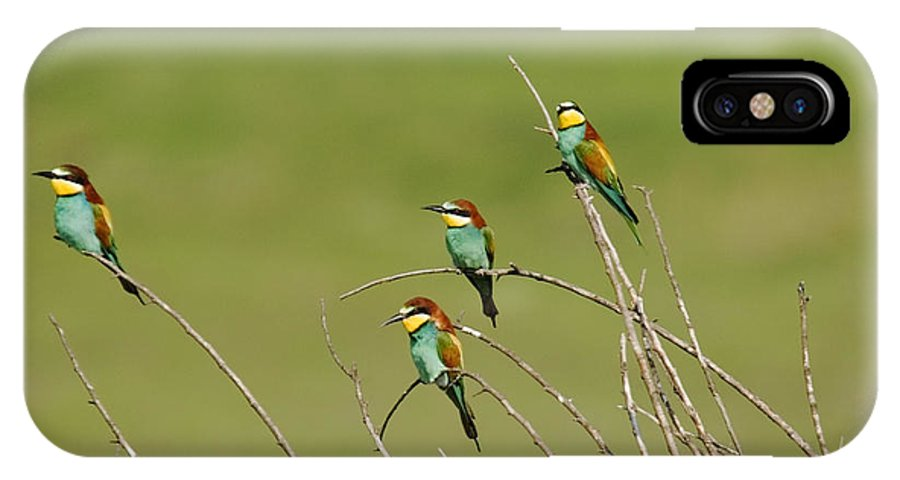 Bee Eaters IPhone X Case featuring the photograph Bee Eaters by Cliff Norton