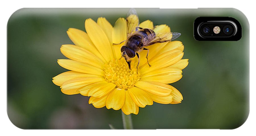 Animal IPhone X Case featuring the photograph Bee extracting by Adrian Bud