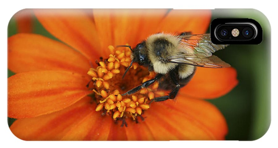 Bee IPhone X Case featuring the photograph Bee On Aster by Margie Wildblood