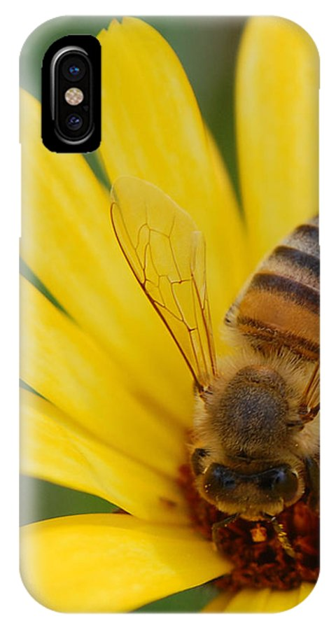 Bee IPhone X Case featuring the photograph Bee On Flower by Amy Fose