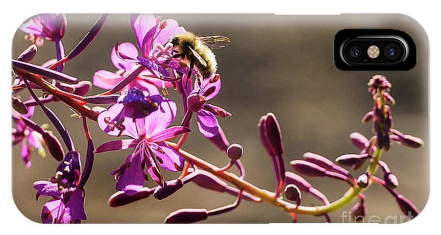 Fireweed; Lupine; Whatcom County; Bellingham; Mount Baker Ski Area; Mt. Baker-snoqualimie National Forest; North Cascades National Park; Picture Lake; Heather Meadows; Pollinating; Pollination; Bumblebee; IPhone X Case featuring the photograph Bee On Lupine by Paul Conrad