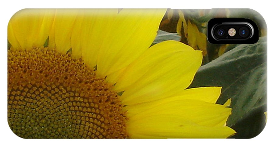 Bee's IPhone Case featuring the photograph Bee On Sunflower 1 by Chandelle Hazen