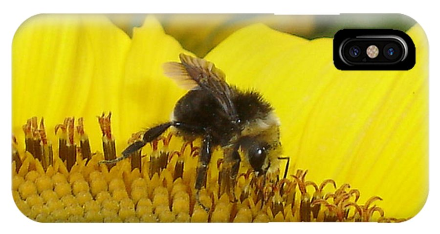 Bee's IPhone X Case featuring the photograph Bee on Sunflower 2 by Chandelle Hazen