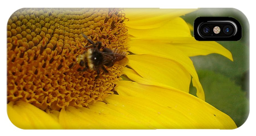 Bee IPhone X Case featuring the photograph Bee On Sunflower 3 by Chandelle Hazen