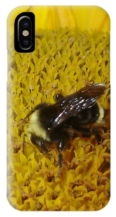 Bee IPhone X Case featuring the photograph Bee on Sunflower 4 by Chandelle Hazen