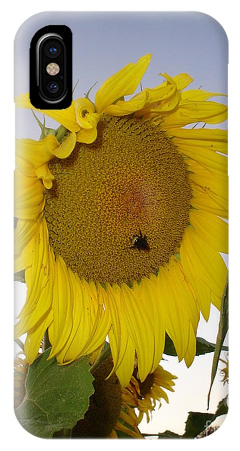 Bee On Sunflower IPhone X / XS Case featuring the photograph Bee On Sunflower 5 by Chandelle Hazen