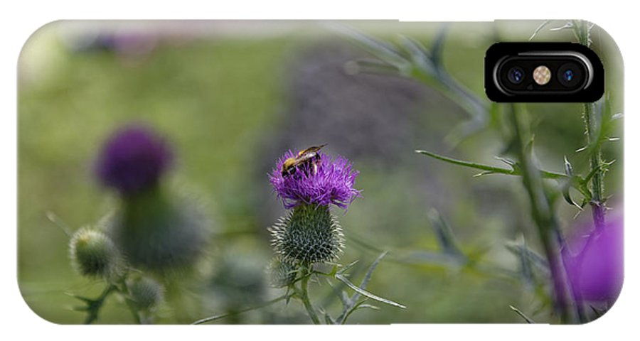 Autumn IPhone X Case featuring the photograph Bee Visiting Roadside Thistle by Adrian Bud