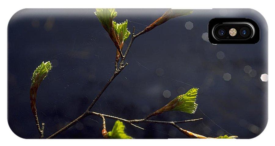Green IPhone Case featuring the photograph Beech Buds by Michael Mogensen