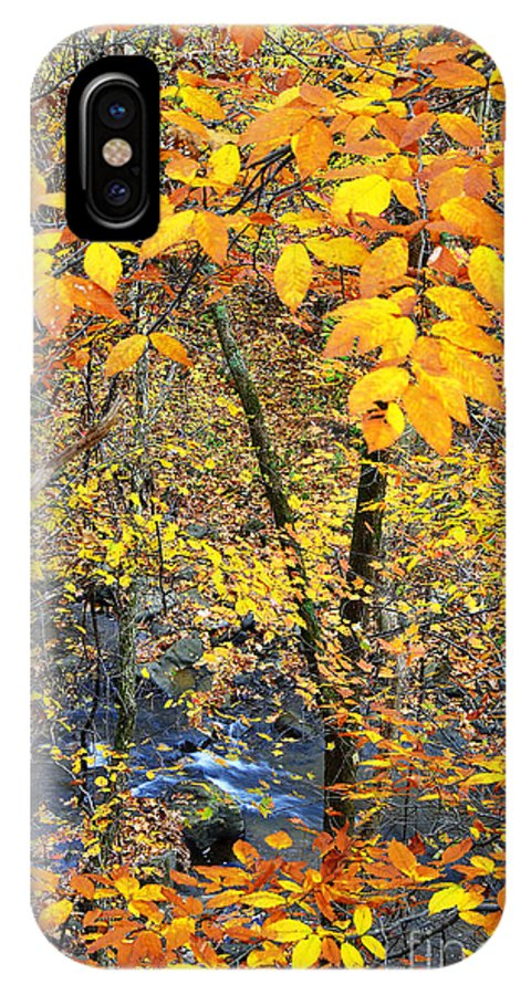 West Virginia IPhone X / XS Case featuring the photograph Beech Leaves Birch River by Thomas R Fletcher