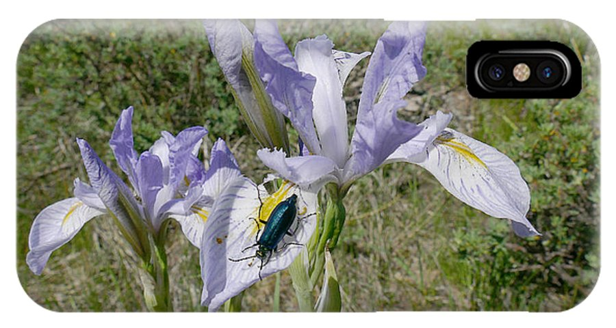 Ron Glaser IPhone X / XS Case featuring the photograph Beetle On Iris by Ron Glaser