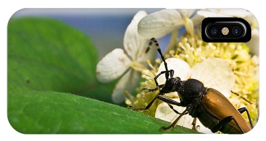 Crossville IPhone X Case featuring the photograph Beetle Preening by Douglas Barnett