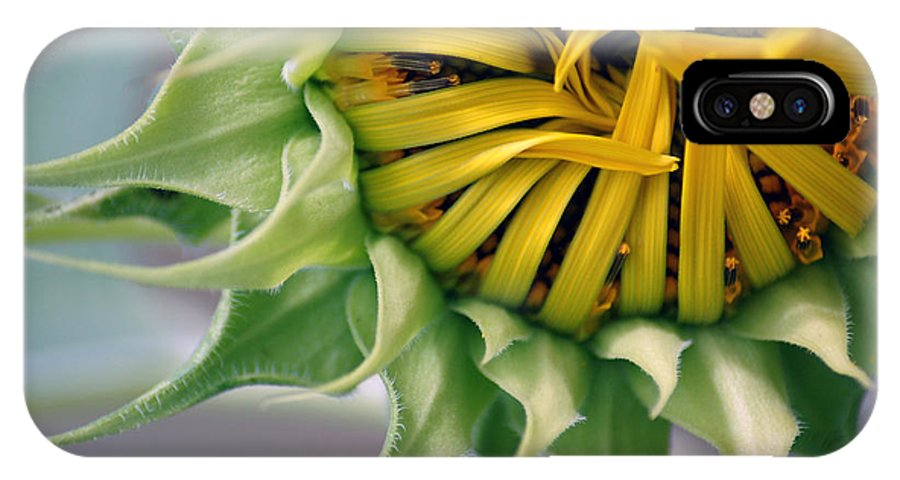 Sunflower IPhone X Case featuring the photograph Beginning To Bloom by Donna Bentley