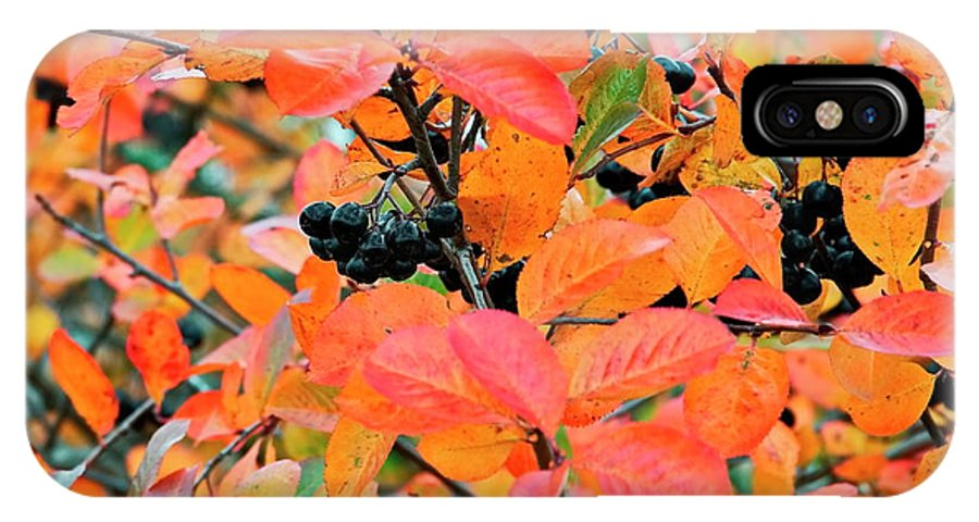 Aronia Mitschurinii IPhone X Case featuring the photograph Berry Aronia by Esko Lindell