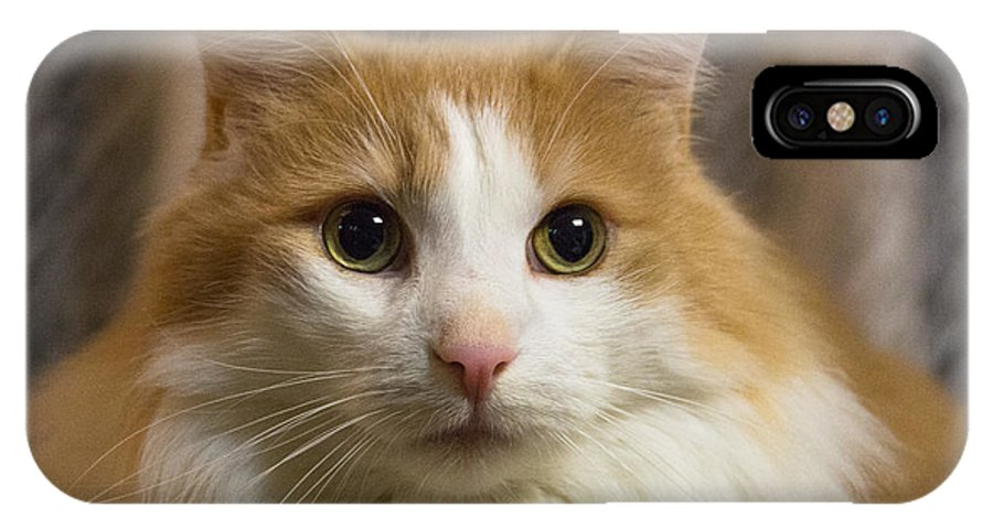 Cats IPhone X Case featuring the photograph Best Friend by Peteris Vaivars