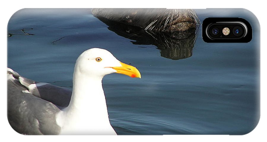 Seagull IPhone X / XS Case featuring the photograph Best Friends by Louise Magno