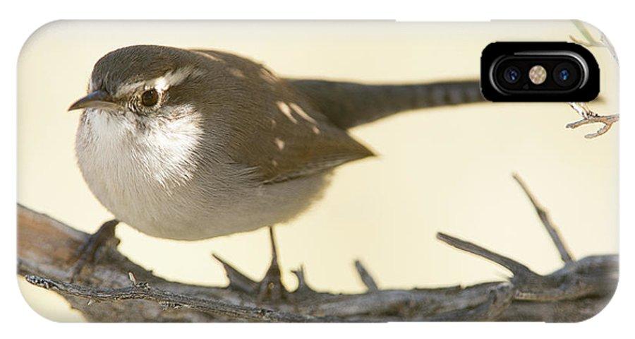 Bird IPhone X Case featuring the photograph Bewick's Wren by Dennis Hammer