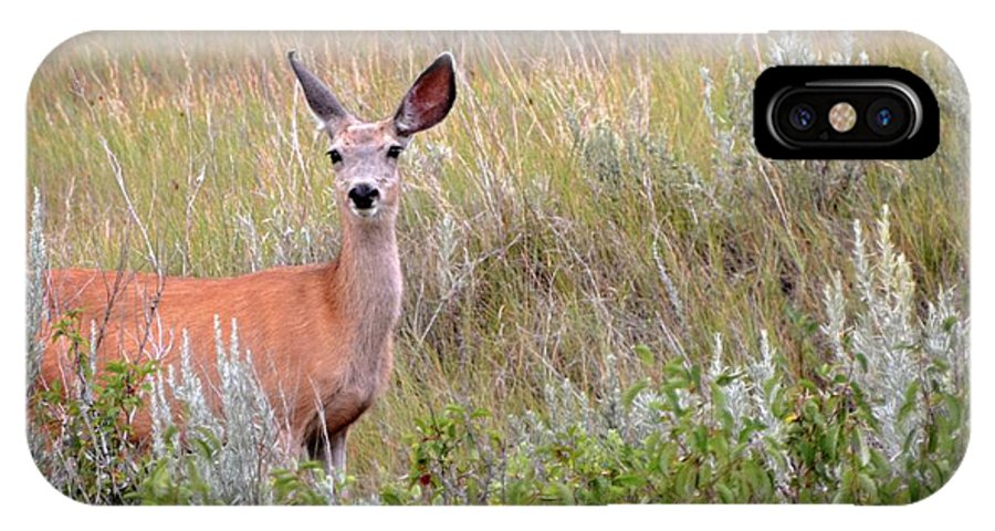 Deer IPhone X Case featuring the photograph Big Ears by Marty Koch