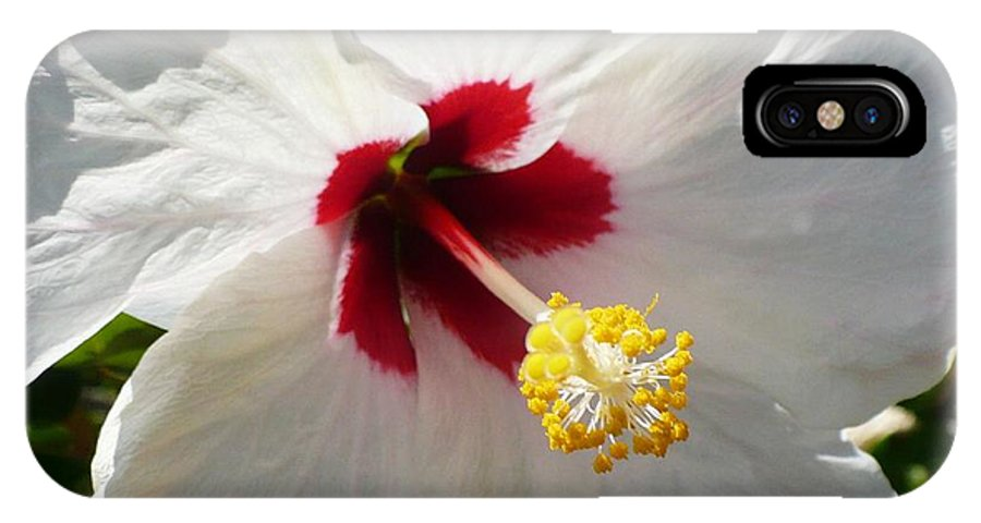 Floral IPhone X Case featuring the photograph Big White Hibiscus by Florene Welebny