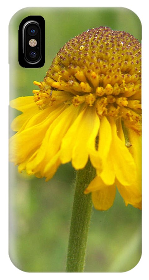 Flower IPhone X Case featuring the photograph Bigelow by Amy Fose