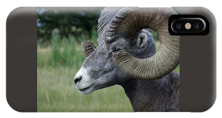 Big Horned Ram IPhone X Case featuring the photograph Bighorned Ram by Tiffany Vest