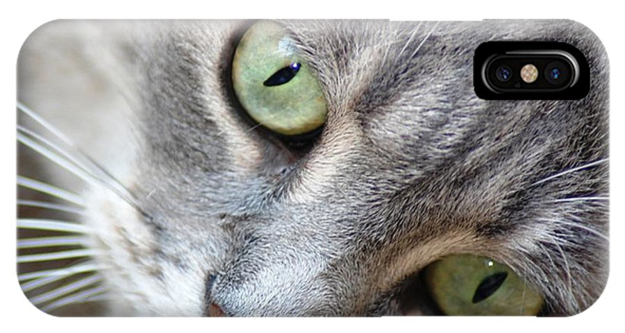 Cat IPhone X Case featuring the photograph Binkster by Donna Bentley