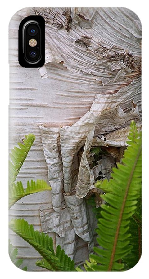 Tree IPhone Case featuring the photograph Birch Fern by Gale Cochran-Smith