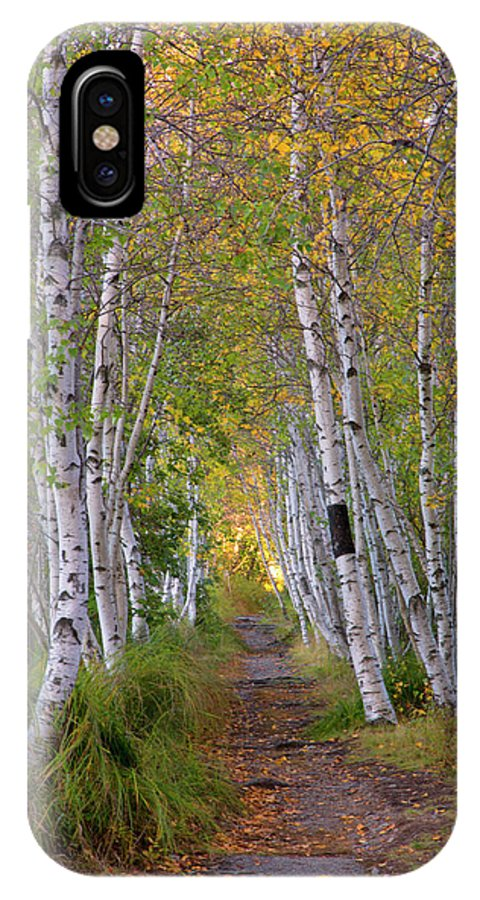 Acadia IPhone X Case featuring the photograph Birch Path by Nancy Dunivin