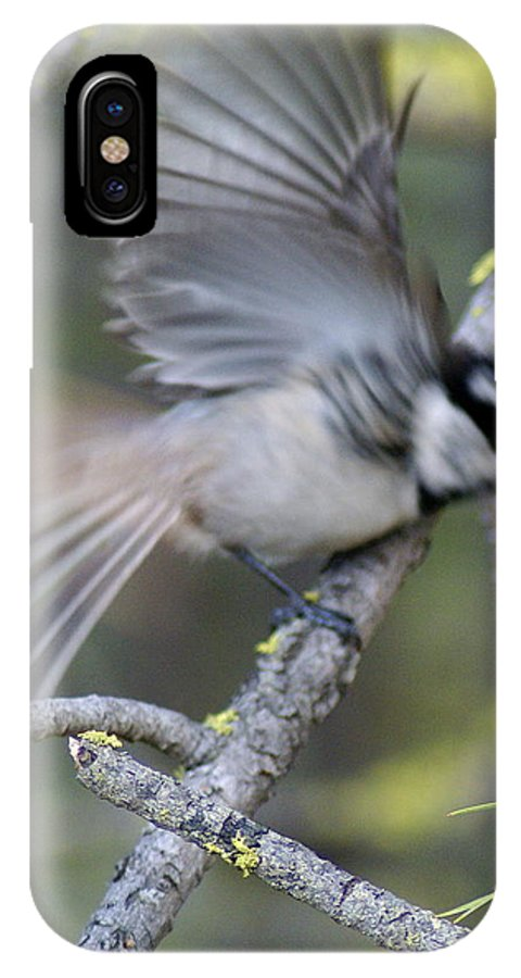 Birds IPhone X Case featuring the photograph Bird In Action 2 by Ben Upham III