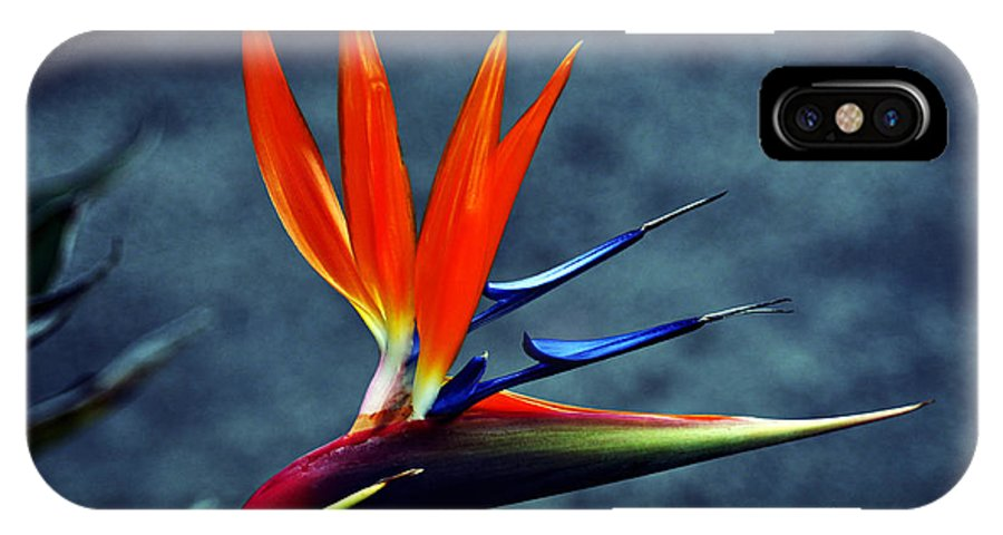 Clay IPhone X Case featuring the photograph Bird Of Paradise by Clayton Bruster