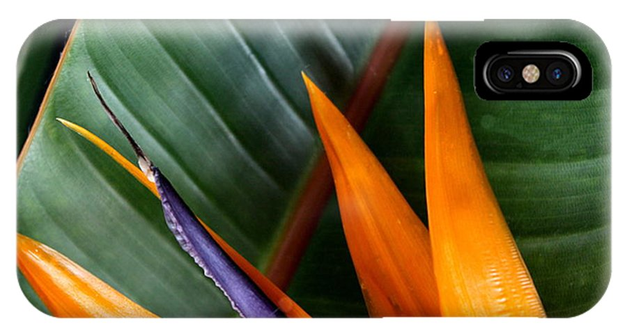 Bird Of Paradise IPhone X Case featuring the photograph Bird Of Paradise II by Diane Merkle
