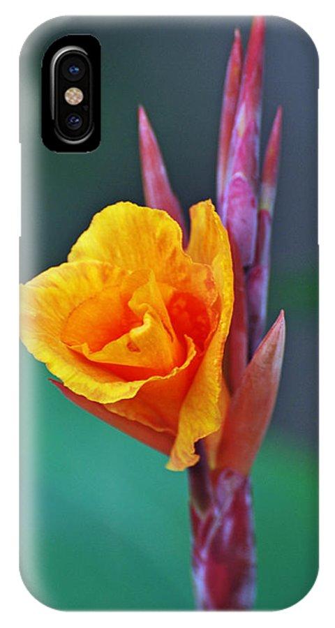 Teresa Blanton IPhone X Case featuring the photograph Bird Of Paradise by Teresa Blanton