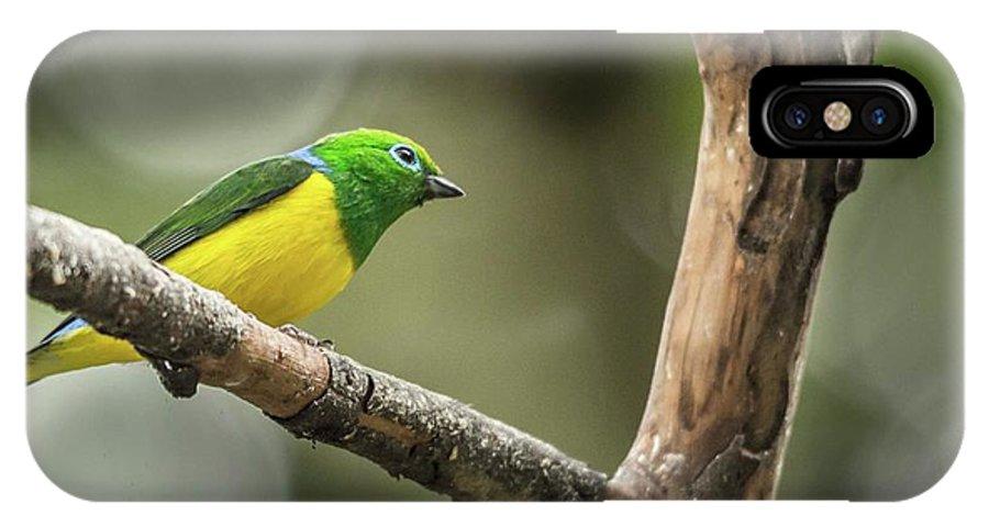 Photo Tours Peru IPhone X Case featuring the photograph Bird Of Peru by Flavio Huamani Quejia